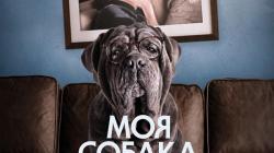 ПРОвзгляд представляет фильм Моя Собака Идиот